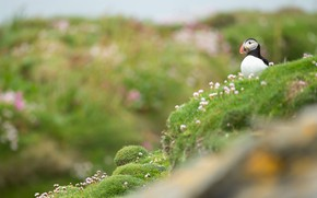 Picture flowers, bird, hill, stalled, bokeh