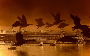 Picture water, birds, the rise