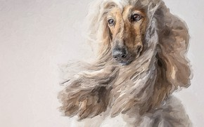 Picture animals, photoshop, dog, picture, painting