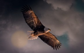 Picture the sky, flight, hunter
