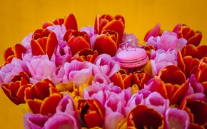 Picture flowers, bouquet, ring, tulips