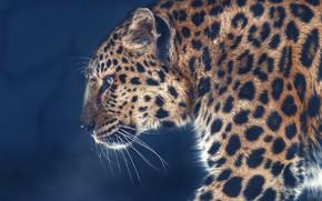 Picture background, portrait, leopard, profile, wild cat, Oleg Bogdanov