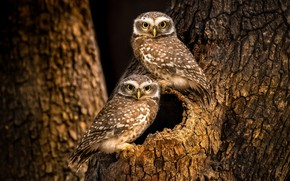 Picture Tree, The hollow, Motley, Owlets