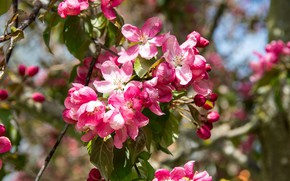 Picture nature, branch, spring, petals, Apple, flowering