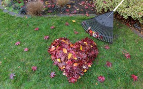 Picture autumn, grass, leaves, love, heart, colorful, red, love, maple, lawn, heart, wood, autumn, leaves, romantic, …