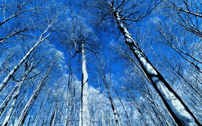 Picture the sky, trees, nature