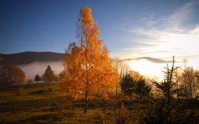Picture autumn, trees, mountains, dawn, shadow