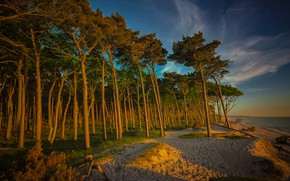 Wallpaper sand, forest, beach, the sky, clouds, light, trees, branches, nature, lake, river, blue, trunks, shore, ...