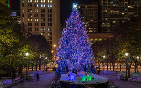 Picture the city, photo, Home, The evening, The city, Chicago, New year, Tree, USA, Street lights
