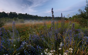Picture forest, landscape, nature, fog, morning, meadow, grass, Sergey Sergeev