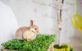 Picture rabbit, weed, chicken