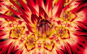 Picture flower, macro, pattern, petals, red, Dahlia, yellow