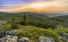 Wallpaper Sunset, Nature, Trees, Forest, Stones, Landscape