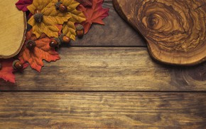 Picture autumn, leaves, background, tree, colorful, Board, wood, acorns, background, autumn, leaves, autumn, maple