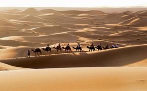 Picture the sun, landscape, the dunes, heat, horizon, Sands, caravan, travelers, the Sahara desert, light and …