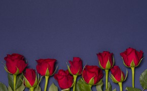 Picture flowers, roses, red, red, buds, flowers, romantic, roses