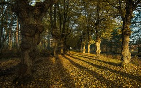 Wallpaper autumn, the city, street