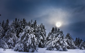 Picture winter, forest, the sky, the sun, clouds, light, snow, landscape, nature, winter, ate, pine, young, …