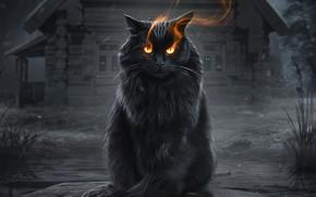 Picture night, magic, mystic, magic, black cat, night, old house, fiery eyes, fantasy art, black cat, …