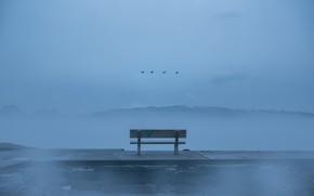 Picture birds, fog, bench