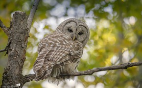 Picture greens, nature, tree, owl, bird, branch, bokeh