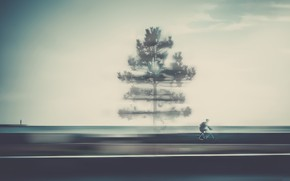 Picture road, tree, cyclist