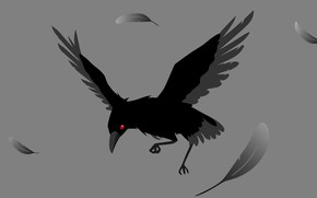 Picture feathers, grey background, crow, red eye