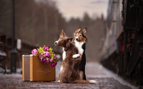 Picture flowers, train, the platform, suitcase, a couple, two dogs, Anna Oris
