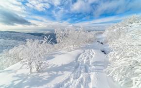 Picture winter, snow, trees, traces, the snow, Russia, Sakhalin, Alexander Eganov, Gora Bykova