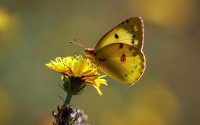 Wallpaper flower, butterfly, butterfly