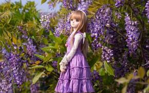 Picture lilac, doll, Wisteria