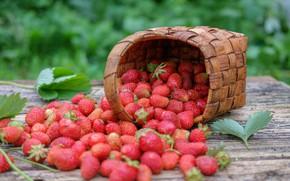 Picture berries, basket, strawberries
