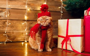 Picture cat, cat, scarf, red, Christmas, gifts, New year, garland, cap, box