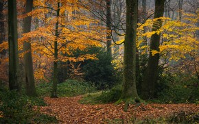 Picture autumn, forest, trees, Germany, fallen leaves