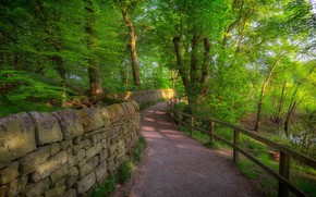 Picture road, forest, landscape, nature, beauty, Perilla