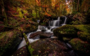Picture autumn, forest, trees, stones, France, waterfall, moss, cascade