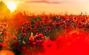 Picture field, Maki, meadow