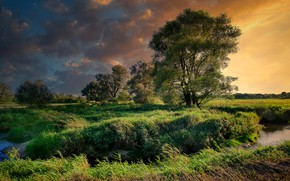 Picture the sky, grass, clouds, trees, sunset, thickets, shore, river, the bushes, pond