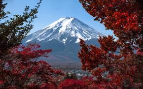 Picture autumn, snow, trees, landscape, nature, mountain, Japan, Fuji
