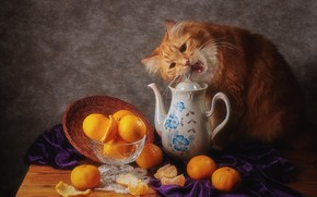 Picture cat, cat, look, face, pose, the dark background, table, food, kettle, red, mouth, dishes, fabric, …