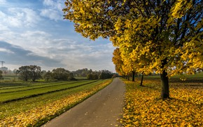 Picture road, field, leaves, clouds, trees, landscape, branches, nature, Park, the way, tree, trunks, perspective, foliage, …