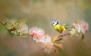 Picture flowers, bird, branch, tit