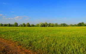 Picture road, field, summer, the sky, grass, trees