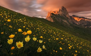 Picture clouds, flowers, mountains, the evening, yellow, slope, Alps, hill, anemones, The Dolomites, globeflowers