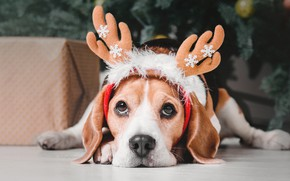 Picture snowflakes, holiday, tree, Christmas, dog, horns