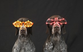 Picture animals, dogs, light, holiday, glasses, black background