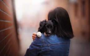Picture girl, street, puppy