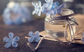 Picture macro, flowers, newspaper, rope, jar