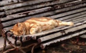 Picture cat, background, bench