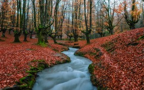 Picture autumn, water, trees, nature, foliage, stream, Spain